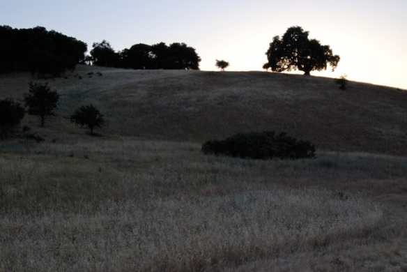 Twilight Oak 2